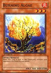 Burning Algae - IOC-062 - Common - 1st Edition on Channel Fireball