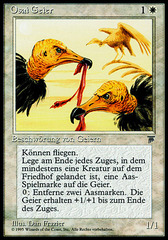 Osai Vultures (Osai Geier)