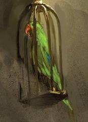 #PC010 Lucky the Parrot / Explorer