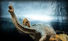 Allosaurus vs Camarasaurus