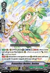 Osmanthus Maiden, Anelma - V-EB14/017EN - RR