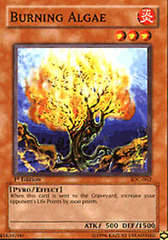 Burning Algae - IOC-062 - Common - 1st Edition